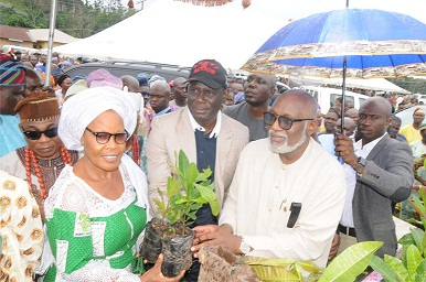 Rebirth of Cocoa, oil palm production in Ondo State