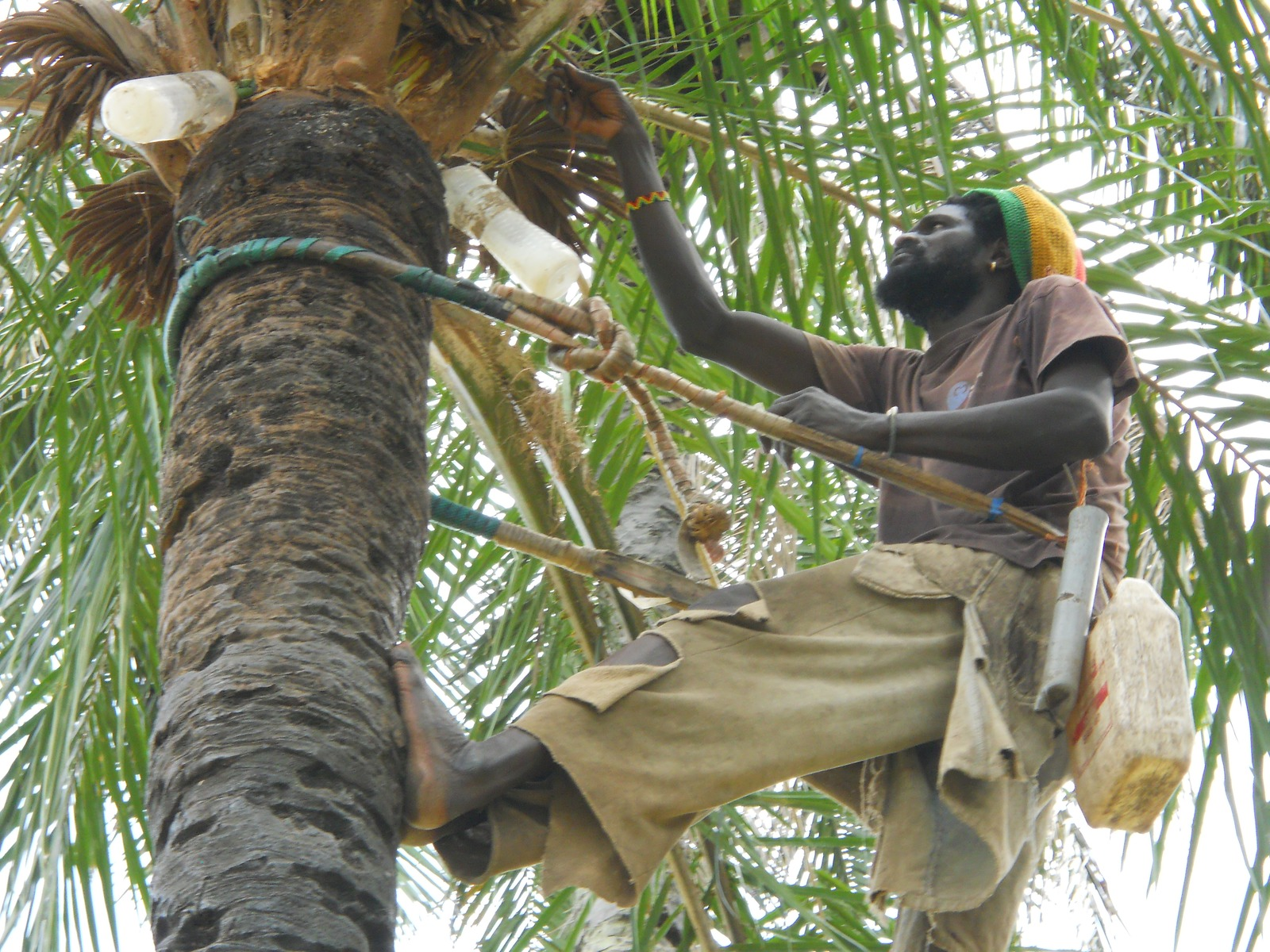 Palmwine tapper disappears in  Akoko