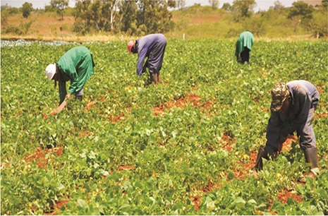 Soil test crucial to cultivation – Expert