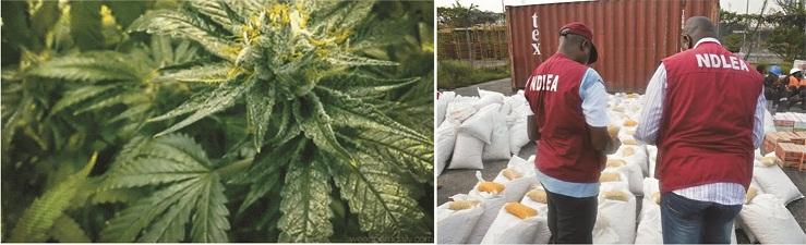 Should Marijuana be legalized in Nigeria?