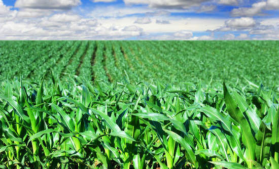 Importance of agric stressed