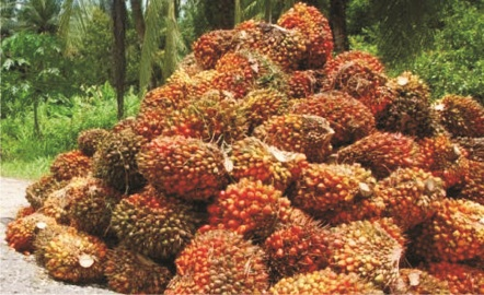 Three in court for stealing palm fruits