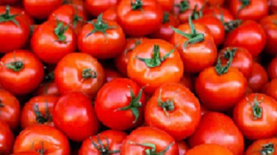 Lack of irrigation affecting tomatoes production- Expert