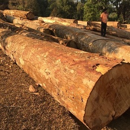 Two arraigned for stealing timber logs
