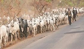 Lawyer frowns at Fulani herdsmen recallto North