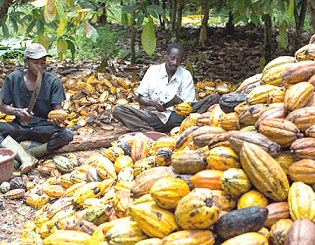 'We'll make Ondo leading cocoa producer'