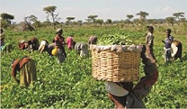 Expert urges farmers to embrace information technology