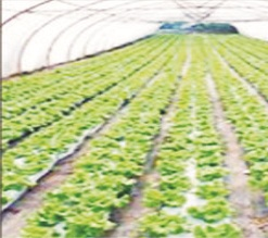 Farmer calls for youths empowerment