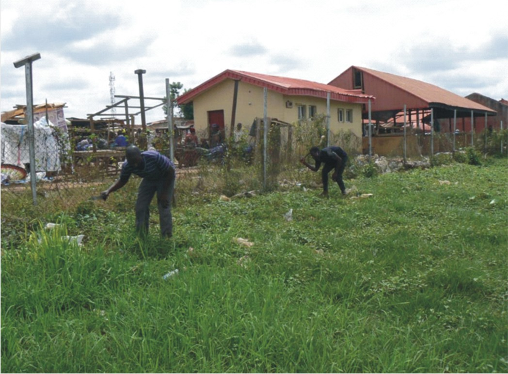 Curfew violation: 14 sentenced to grass cutting
