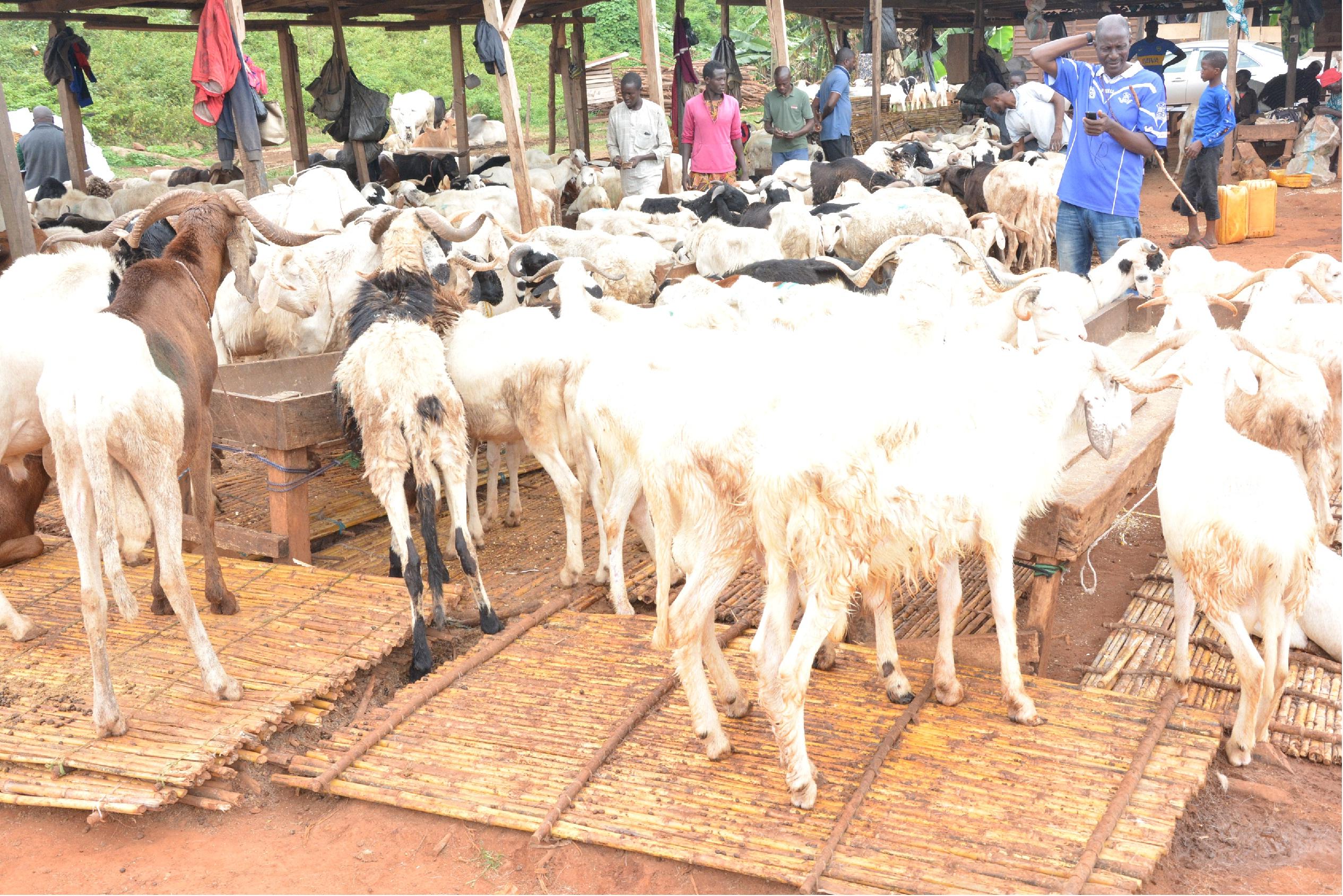 Ondo Muslims celebrate Eid-El-Kabir