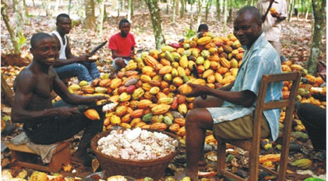 'Why farmers should determine cocoa price'